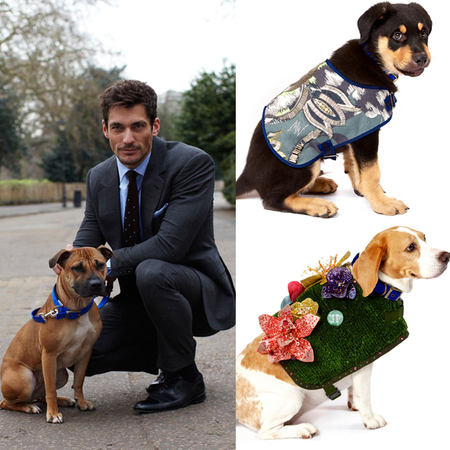 David Gandy and Battersea Dogwalk