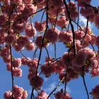 Seasonal wedding flowers: Spring