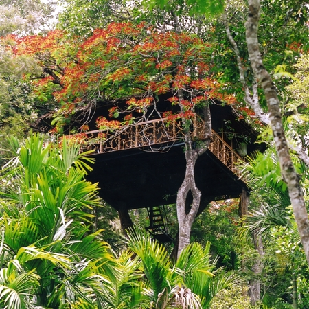 Treehouses, luxury holidays