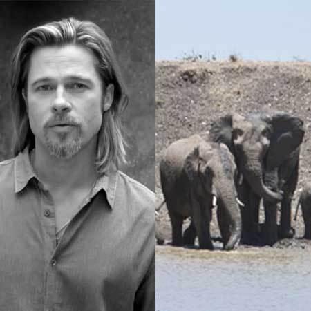 Brad Pitt angelina jolie elephants at wedding