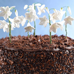Easter Recipe: Chocolate Snowdrop Cake
