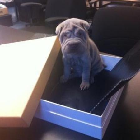 victoria beckham new puppy barnaby
