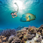 Explore the Great Barrier Reef in your home