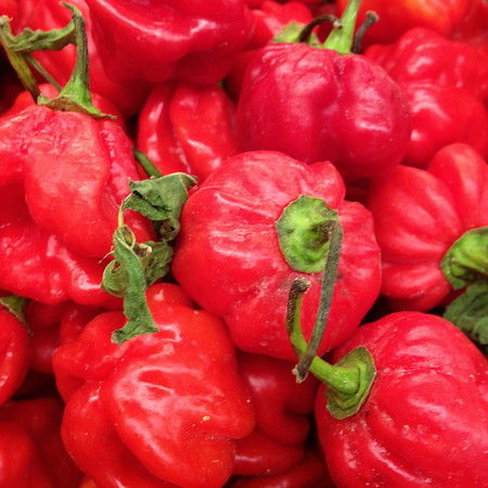 Scotch Bonnet peppers