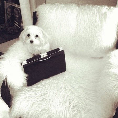 Tyler Alexandra clutch black leather clutch bag - white dog with a handbag - handbag.com