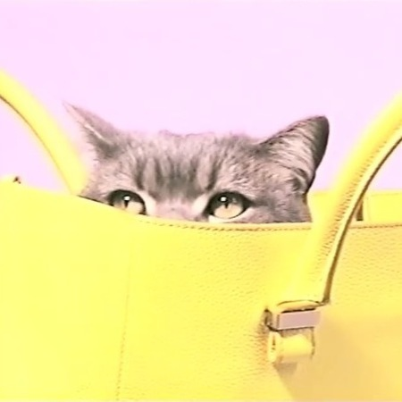 victoria backham liberty bag - cute cat in a handbag - handbag.com