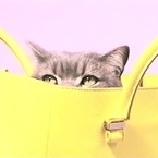 Cute cat in a Victoria Beckham Liberty bag. That's all.