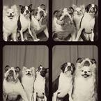 Rescue dogs have photo booth party