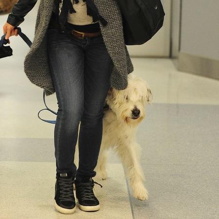 Olivia Wilde's dog