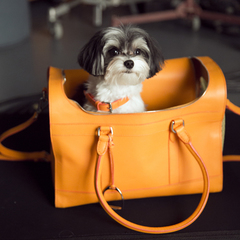 ralph lauren dog walk - handbag collection - cute dog in orange handbag - handbag.com