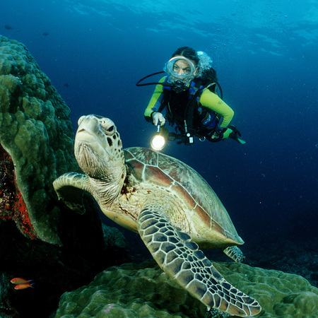 great barrier reef diving - travel animal feature - travel bag - handbag.com