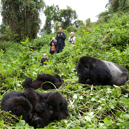 rwanda - gorillas - travel animal feature - travel bag - handbag.com