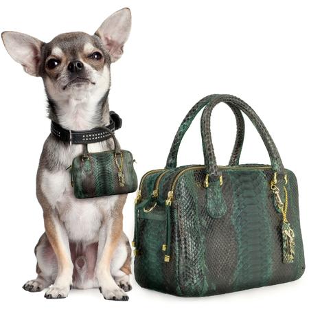 Designer handbags for your dog - matching handbags with your dog - designer handbag trend - doggy style - handbag news - handbag.com