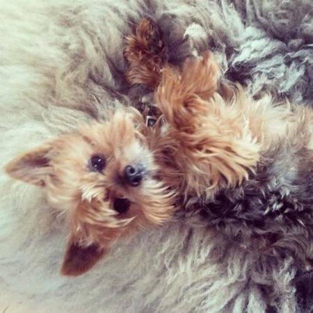 Miranda Kerr's dog Frankie