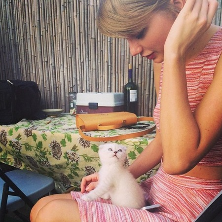 Taylor Swift gets a new kitten