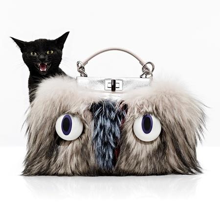 Black cat in a Fendi Peekaboo bag