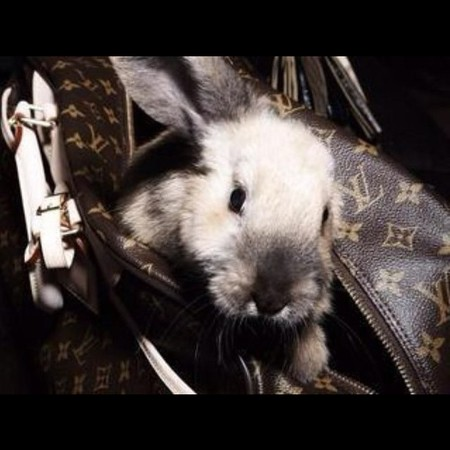 Cute bunny rabbit in Louis Vuitton bag